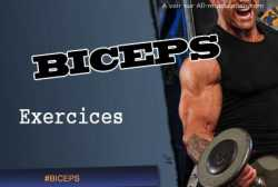 Exercices des Biceps