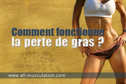 Comment on perd du gras?