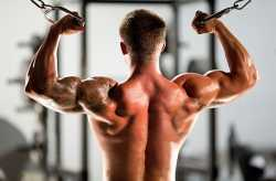 Comment muscler les biceps ?