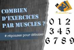 Combien d'exercices par muscle ?