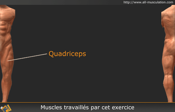 Muscles ciblés par le Leg extension