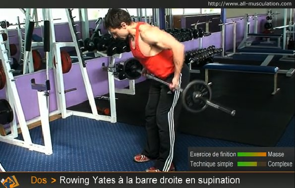 Fin de l'exercice : Rowing Yates barre droite supination